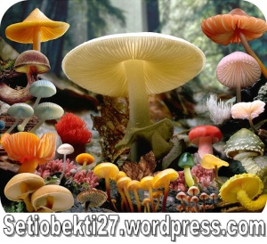 kingdom-fungi-pic-4